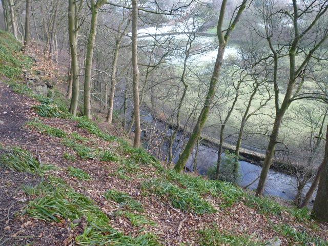 Wood behind the Hinchliffe