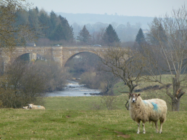 Bridge over the Tyne at Chollerford