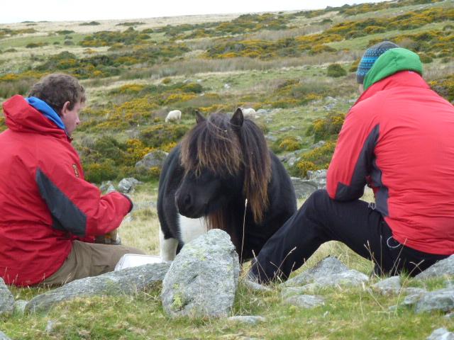 Very cheeky pony